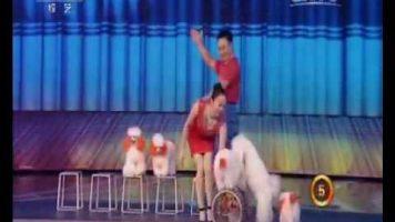 Adorable Puppies Performing Acrobatics
