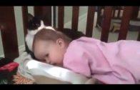 Cute Little Kitten And Sleeping Baby