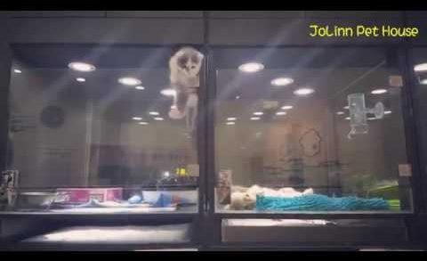 Cute Kitten Escapes Cage To Play With Puppy