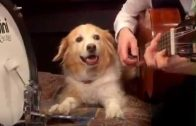 This Dog Has More Talent And Sense Of Music