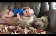 Cute Little Baby And Pitbull