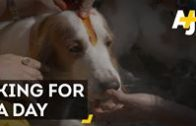 Dogs Are Celebrated At Nepal's Kukur Tihar Festival