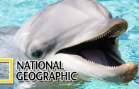 Dolphins: The Wild Side – National Geographic Documentary
