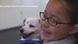 Girl Teaches Her Dog Sign Language