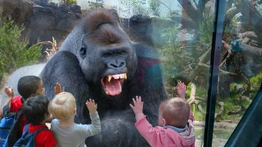 Kids With The Wild Animals At The Zoo
