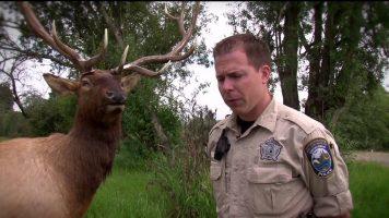 Wildlife Decoys Helps Catch Poachers