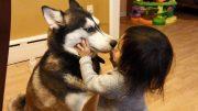 Baby Loves Siberian Husky Dog