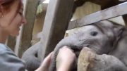 Humans Have A Special Bond With Elephants