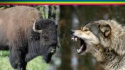 National Geographic Wild – Epic Life And Death