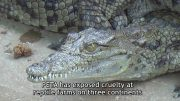 """The True Cost of Your """"Luxury"""" Crocodile Skin Bags"""