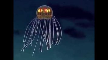 Things You Never Knew About The Mariana Trench