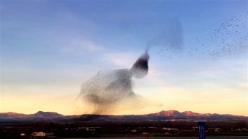 A Great Magical Cloud Of Birds