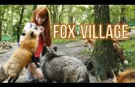 The Fox Village in Zao, Japan