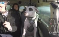 Dog Flying Airplane Is Just Unbelievable