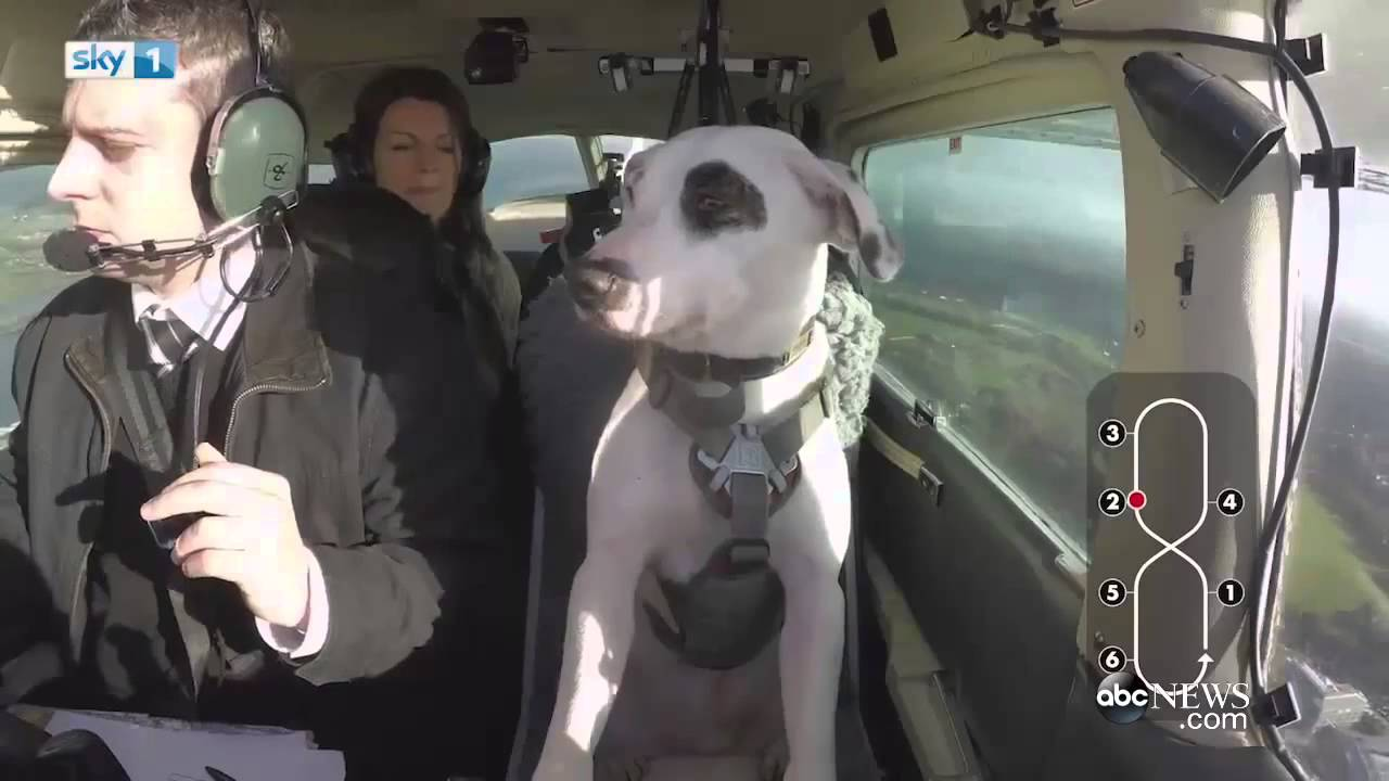 Dog Flying Airplane Is Just Unbelievable Videsta Com