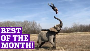 People Are Awesome – Best Of March 2017