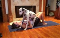 Dalmatian Interrupts Yoga Session