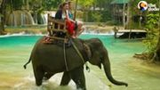 Why You Should Never Ride An Elephant