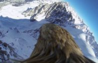 Mont Blanc From A Flying Eagle Point Of View