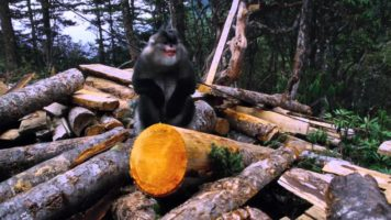 Monkey Awakens Environmental Consciousness In China
