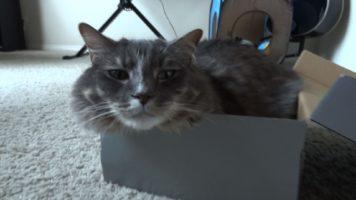 Cat – If It Fits, I Sit!