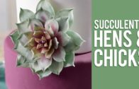 How To Make Gum Paste Echeveria Succulents