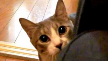 Meet The Stalking Cat