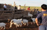 Mongolia 'Szud' 2010 – World Animal Protection