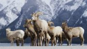 Alberta Canada – Frozen Banff National Park