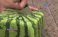 Square Watermelons From Japan