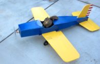 Squirrel Steals The Airplane