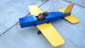 Squirrel Steals The Airplane