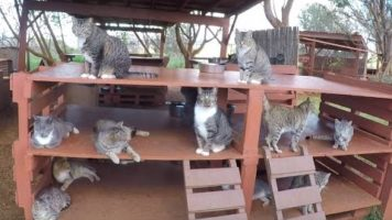 Island Cats – The Lanai Cat Sanctuary of Hawaii