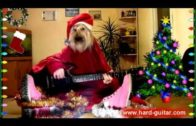 Dog Wishes Merry Christmas While Playing Guitar