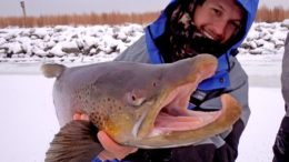 Ice Fishing For Giant Brown Trout