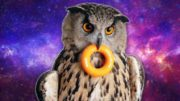Best Of Owls In 3 Minutes – Funny and Cute Owl Compilation