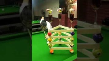 Amazing Pool Trick Shots From China