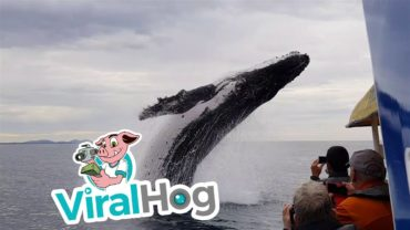 Awesome Whale Sighting In The Sea