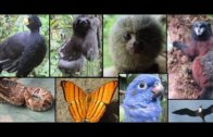 Crazy Animals From South America Compilation