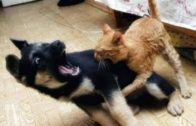 Ninja Cats Vs Dogs Funny Compilation