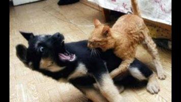 Ninja Cats Vs Dogs Funny Compilation