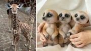 Cute Little Animals Will Keep You Smiling All Day