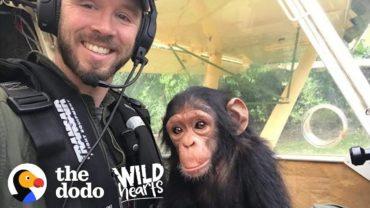 A Pilot Rescues A Cute Baby Chimp