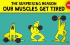 Reason Why Our Muscles Get Tired