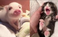 Adorable Baby Animals Will Make Your Day