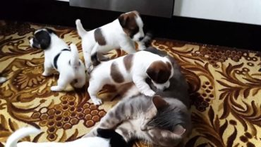 When Cats Meet Puppies For The First Time