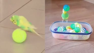 Cutest Budgie Compilation To Make You Smile