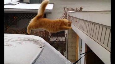Funniest Cat Jump Fails Compilation