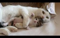 Adorable Mother Cats And Their Cute Kittens