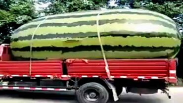 15 Gigantic Fruits And Vegetables Ever Created